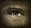 Aging concept or ageing with an open human eye on a wood grain texture of old tree rings as a health care and medical idea of Stock Images