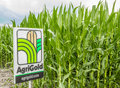 Agri gold field corn an commercial sign identifying a midwestern usa planting Stock Image