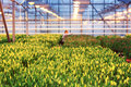 Agribusiness greenhouse with seedling spring Stock Photo
