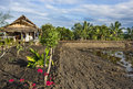 Agricultural area countryside in south east asia wide view of an the near krabi thailand Royalty Free Stock Image