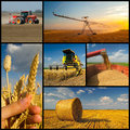 Agricultural collage representing wheat production phases of Royalty Free Stock Photography