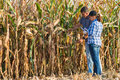 Agricultural expert inspecting quality of corn