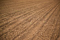 Agricultural field, Arable land soil Royalty Free Stock Photo