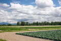 Agricultural field and cloudy sky Stock Photo