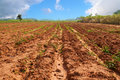 Agricultural field soil landscape of with blue sky Stock Photo