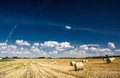 Agricultural field on which wheat has been cleaned Royalty Free Stock Images