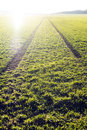 Agricultural fields. Spring time. Traces in land from the tractor. Sunset Royalty Free Stock Photo
