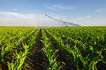 Agricultural irrigation system watering corn field on sunny summ Royalty Free Stock Photo