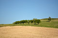 Agricultural italian landscape typical in the marche area in summer a field with green grass with trees in the background in front Royalty Free Stock Photos
