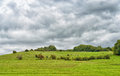 Agricultural landscape in central france with caws eating grass Stock Photos