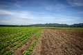 Agricultural landscape gaysorn with a mountain backdrop Royalty Free Stock Photography