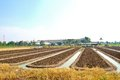 Agricultural landscape ground of in thailand Royalty Free Stock Photography