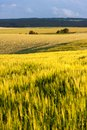 Agricultural landscape of south moravia grain fields in summer evening tišnov moravian region czech republic Royalty Free Stock Image