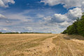 Agricultural landscape wheat field after harvest against the blue sky with white clouds Stock Photos
