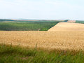 Agricultural landscape wheatfield and gardens in harvest season Stock Photos