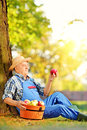 Agricultural worker with basket of apples sitting in orchard and male overalls harvested looking at apple Stock Image