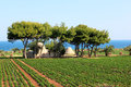 Agriculture along the Adriatic Sea, Italy Royalty Free Stock Photo