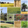 Agriculture collage Royalty Free Stock Image