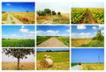 Agriculture collage in summertime fields landscapes roads harvest farms Royalty Free Stock Photos