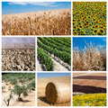 Agriculture concept Royalty Free Stock Photo