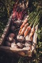 stock image of  Agriculture crop harvest, farmers vegetables