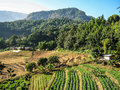 Agriculture in doi inthanon national park asia Stock Images