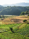 Agriculture in doi inthanon national park nature Stock Photo
