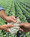 Agriculture farmer and buyer hands holding dollar banknote in soy field Stock Images