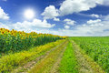 Agriculture fields and blue sky Stock Photos