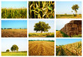 Agriculture fields collage of summer Stock Photography