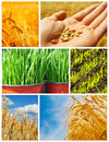 Agriculture, grain production Stock Photo