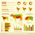 Agriculture infographics flat design elements of livestock chickens and crops vector illustration Stock Images