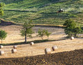 Agriculture landscape with straw bales Royalty Free Stock Photo
