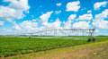 Agriculture landscape view of a freshly growing field with farming irrigation Royalty Free Stock Photo