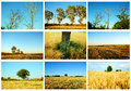 Agriculture and nature collage of details from fields meadows walnut tree wheat fields trees Royalty Free Stock Image