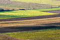 Agriculture nice interesting green field pattern Royalty Free Stock Images