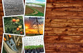 Agriculture photo collage Royalty Free Stock Photo