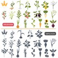 Agriculture plants color flat and simple icons set