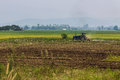 Agriculture plowing tractor on wheat cereal fields in thailand Stock Images