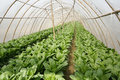 Agriculture tent farm in china there are vegetables in it Stock Images