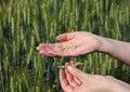 Agronomy Royalty Free Stock Photography