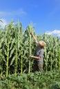 Agronomy Stock Photo