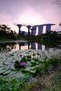 Agua hermosa lily flower marina bay sunset Imágenes de archivo libres de regalías