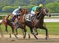Aikenite Wins an Allowance Race Stock Image