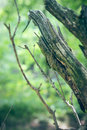 Ailing branches in nature summer Royalty Free Stock Photo