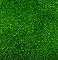 Air bubbles full frame abstract underwater background with lots of small in green ambiance Royalty Free Stock Photo