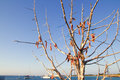 Air dried fish in outdoor tree Mediterranean Royalty Free Stock Photo