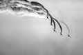 Air group simultaneously performs combat turn black and white Royalty Free Stock Photo