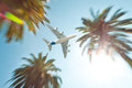 Air plane above palm trees. Stock Images