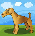Airedale terrier dog cartoon illustration Royalty Free Stock Photo
